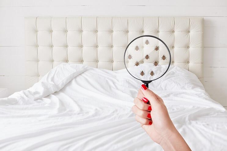 Free-Bed-Bug-Identification.jpg
