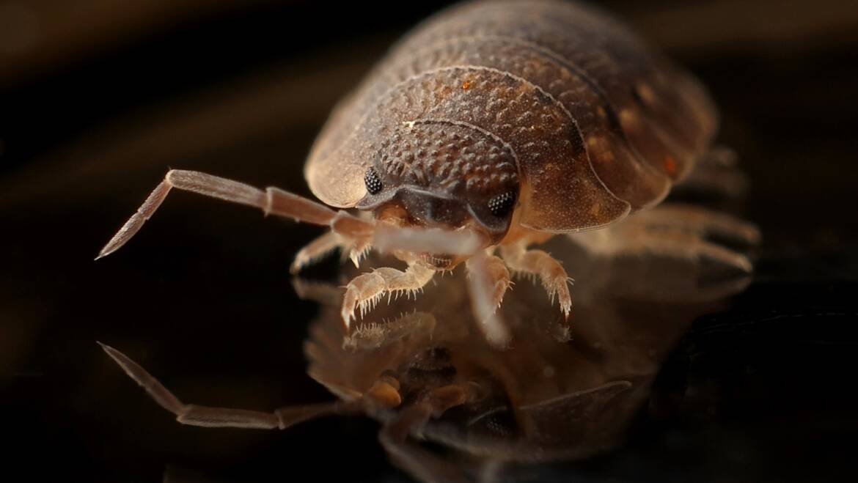 Best treatment for bed bug bites